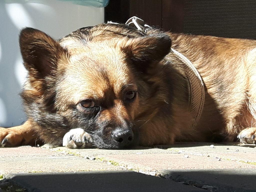 Hund Socke im Sonnenlicht